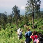 Randonnée au Sri Lanka